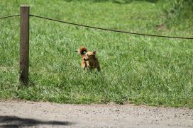 One of the many pooches at the 2014 gathering. Photo courtesy of Mark H.